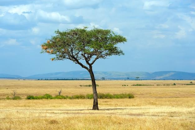 Schöne landschaft ohne baum in afrika in