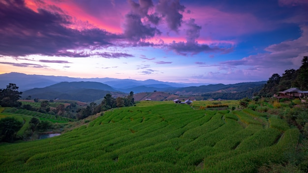 Schöne landschaft. reisfelder bei pa pong pieng dorf, mae chaem, chiang mai, thailand.