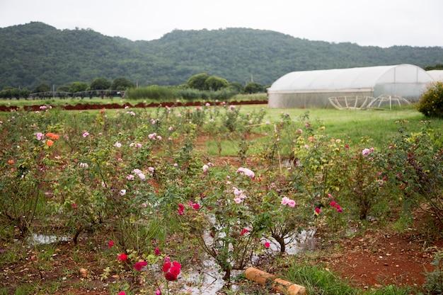 Schöne landschaft rosengarten und berg