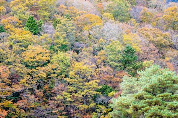 Schöne landschaft viel baum mit buntem blatt um den berg