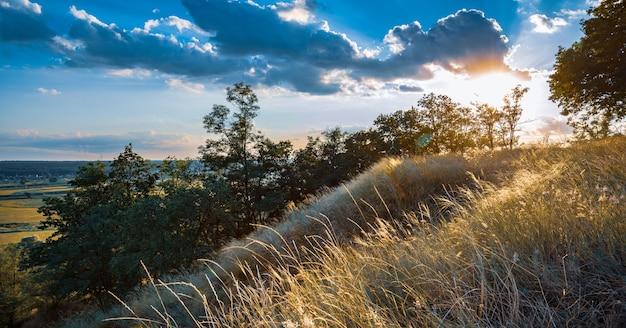 Schöne landschaft von grünen wiesen und sommerwald
