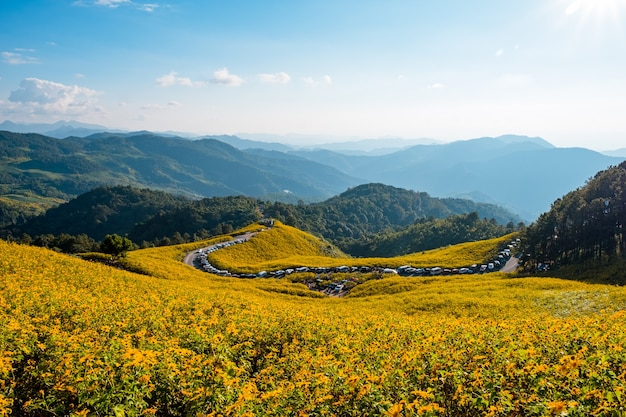 Schöne landschaft von thung bua tanga (ringelblume, mexikanische sonnenblume) felder auf dem berg, khun yuam, mae hong son, thailand.