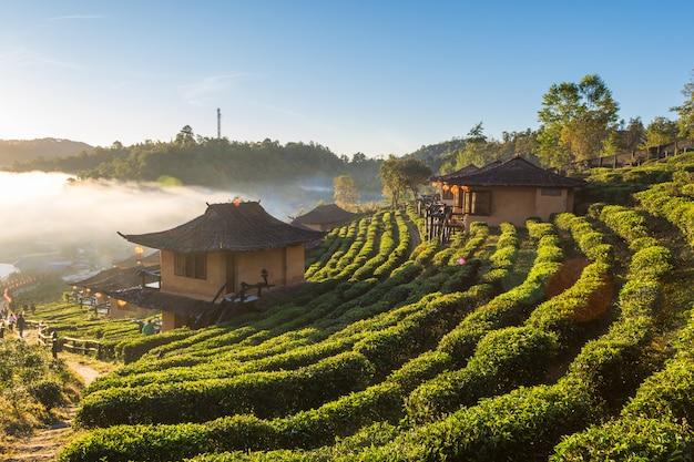 Schöne landschaft während des sonnenaufgangs im chinesischen artdorf unter teeplantage