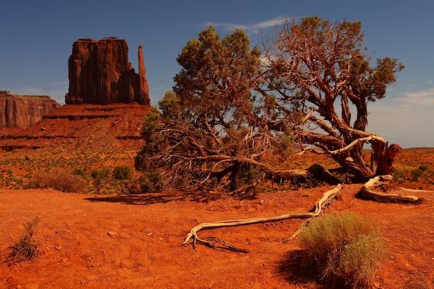 Schöne landschaftsaufnahme eines großen baumes in einer orangefarbenen wüste im oljato-monument valley in arizona