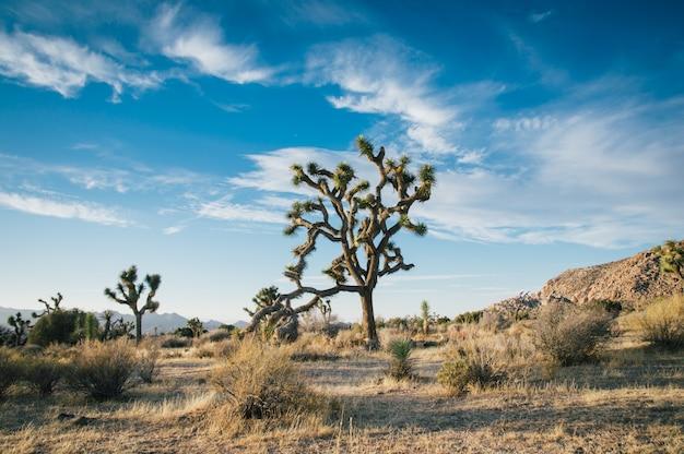 Schöne landschaftsaufnahme von wüstenbäumen in einem trockenen feld mit erstaunlichem bewölktem blauem himmel