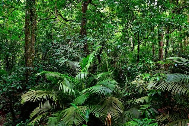 Schöne landschaftsnatur des tropischen regenwaldes in thailand.