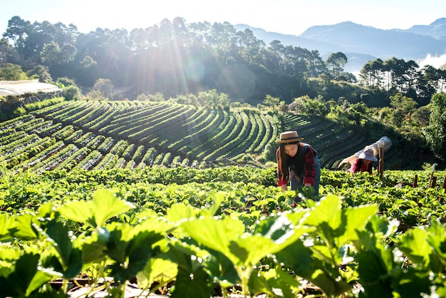 Schöne landwirtfrau, die erdbeerbauernhof überprüft