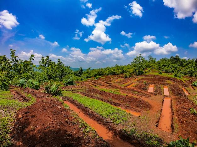 Schöne landwirtschaftliche felder