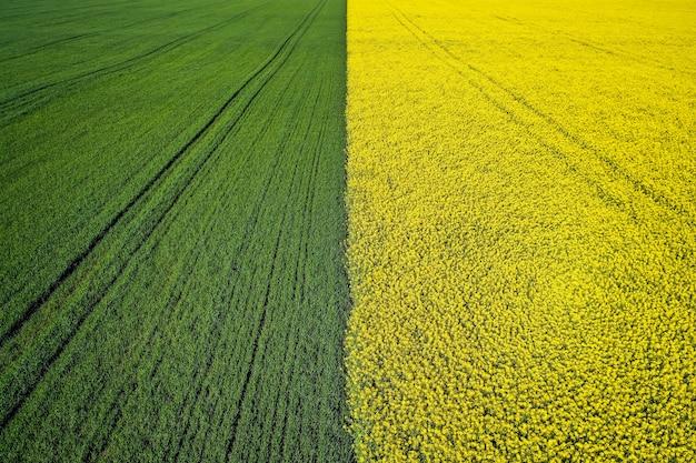Schöne landwirtschaftliche halb grüne halb gelbe grasfläche, die mit einer drohne geschossen wird