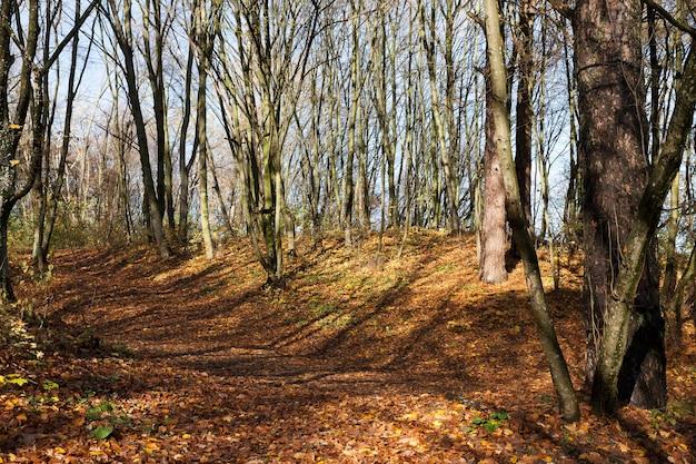 Schöne laubbäume in der herbstsaison während des herbstes der blätter, der wechsel der natur ist saisonal