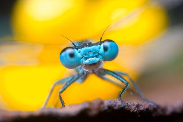 Schöne libelle in der natur, abschluss herauf makro