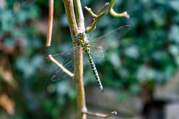 Schöne libelle sitzt auf einem ast mit verschwommener wand