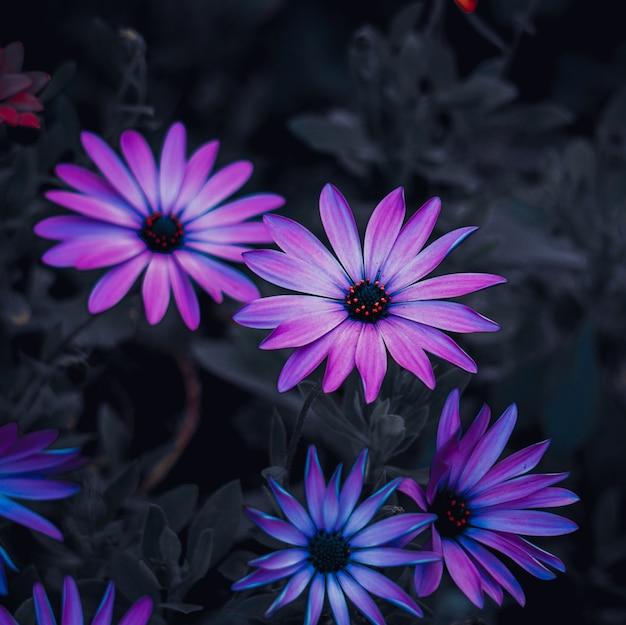 Schöne lila blüten im garten in der herbstsaison