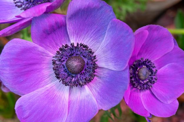 Schöne lila blume.