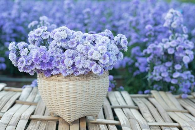 Schöne lila blumen in der natur