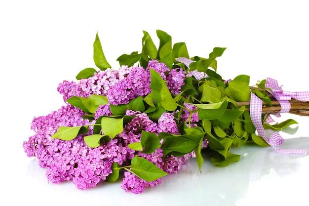Schöne lila blumen lokalisiert auf weiß