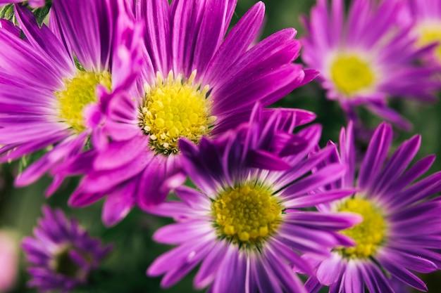 Schöne lila blumen