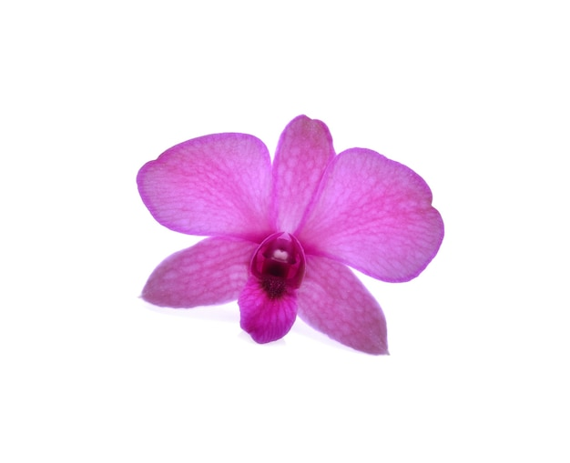 Schöne lila dendrobium orchidee lokalisiert auf weiß