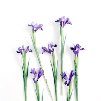 Schöne lila irisblumen auf weißem hintergrund. flache lage, ansicht von oben
