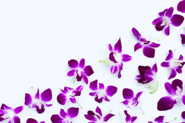 Schöne lila orchideenblüten auf weißem hintergrund.