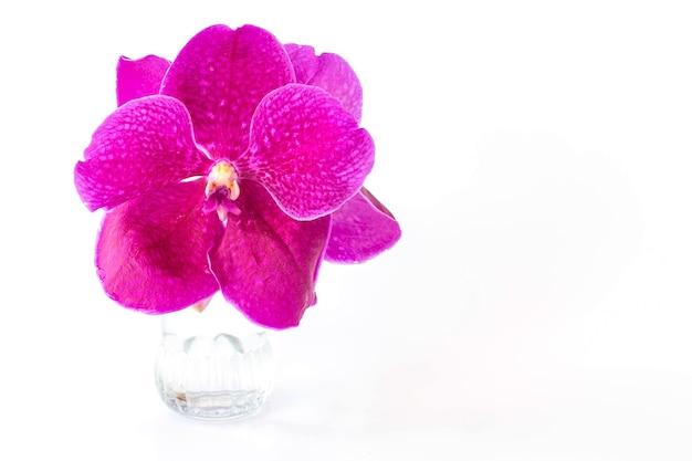Schöne lila orchideenblumen auf einer glasvase.