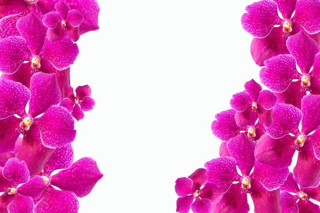 Schöne lila orchideenblumen auf weiß. weicher und verschwommener fokus.