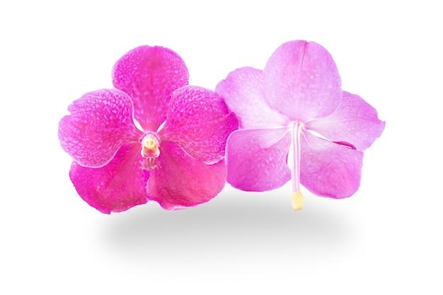Schöne lila orchideenblumen auf weiß.