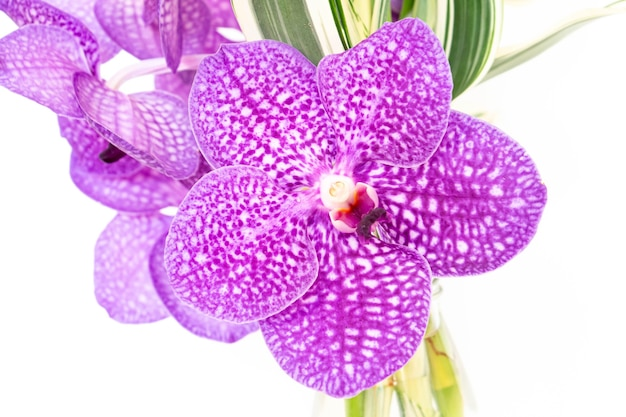 Schöne lila orchideenblumen