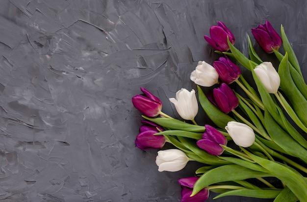 Schöne lila und weiße tulpen auf einem grauen hintergrund.