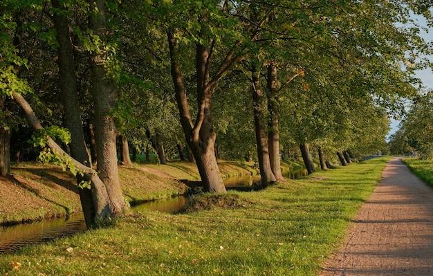 Schöne lindenalleen im herbstpark entlang des flusses. warmer herbstabend, goldenes sonnenuntergangslicht auf den wegen des parks. ruhige abendspaziergänge