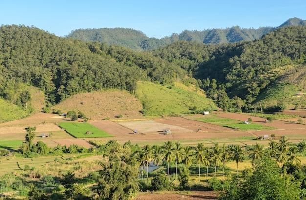 Schöne luftaufnahme der ländlichen landwirtschaft im gebirgstal in mae hong son, thailand