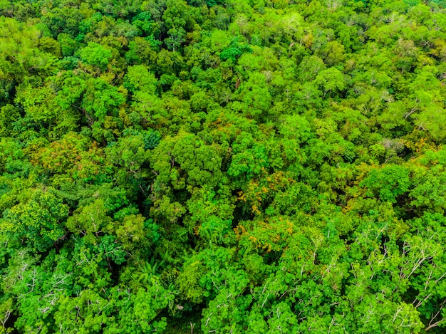Schöne luftaufnahme der naturbäume im wald