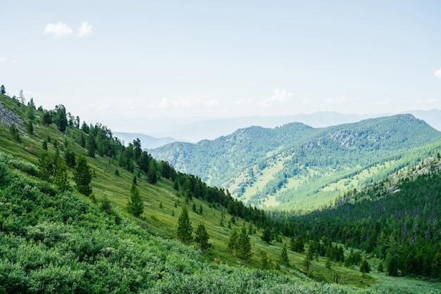 Schöne luftaufnahme zum grünen waldhang und zu den großen bergen. fantastische minimalistische alpine landschaft. wunderbare lebendige landschaft mit waldberghang. malerische hochlandnatur mit nadelbäumen