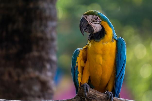Schöne macawpapageien clsoe oben
