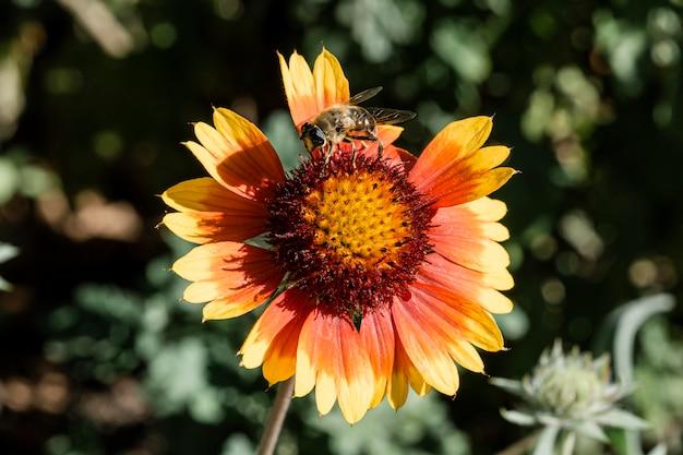 Schöne makroblume in der natur