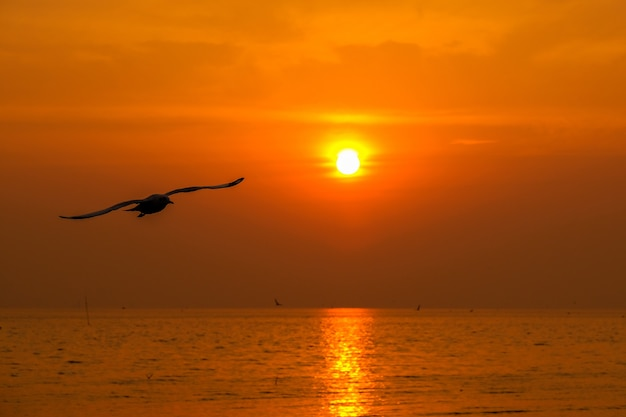Schöne möwe und meer mit sonnenuntergang.