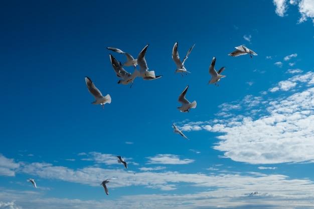 Schöne möwen fliegen im blauen himmel des herbstes