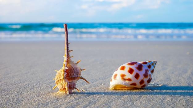 Schöne muscheln am strand im sommer