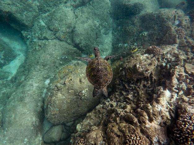 Schöne nahaufnahmeaufnahme einer großen schildkröte, die unter wasser im ozean schwimmt