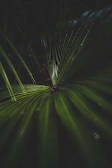 Schöne nahaufnahmeaufnahme einer grünen palmenpflanze mit einem dunklen hintergrund