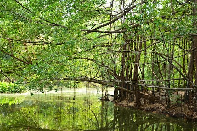 Schöne natürliche landschaft von fluss in tropischem grünem wald südostasiens mit bergen