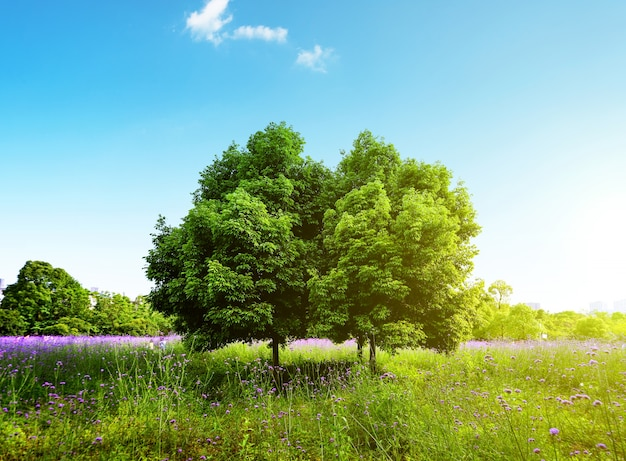 Schöne natürliche landschaft