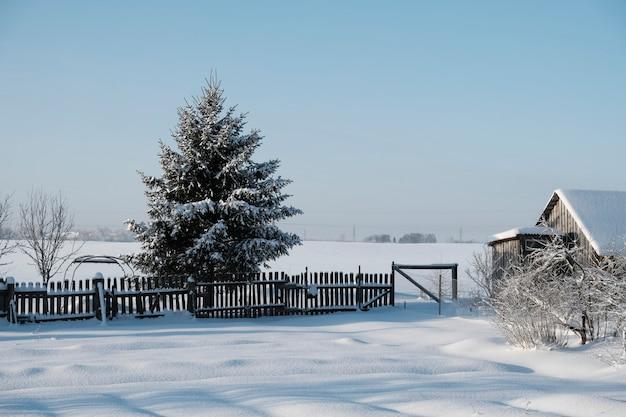 Schöne natur des nordens, natürliche landschaft mit großen bäumen im frostigen winter. hochwertiges foto