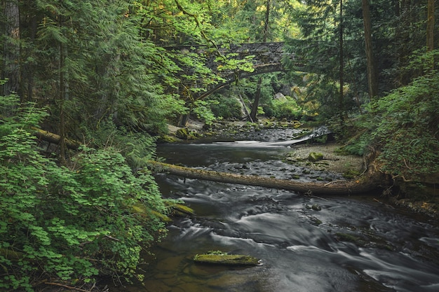 Schöne naturlandschaft eines kleinen flusses mit viel grün und einer alten brücke