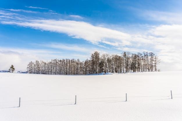Schöne naturlandschaft im freien mit gruppe des baumasts in der schneewintersaison