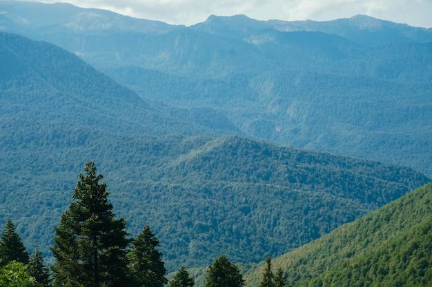 Schöne naturlandschaft mit kaukasus und bäumen