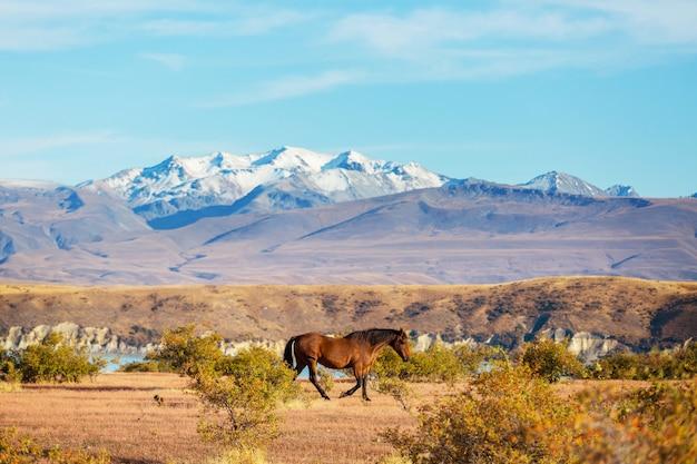 Schöne naturlandschaften im mount cook national park, südinsel, neuseeland