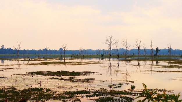 Schöne naturlandschaftsansicht des seeteichs bei neak poan im angkor wat-komplex, siem reap cambodia.