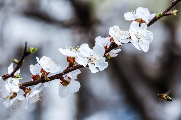 Schöne naturszene der frühlingsblüte mit blühendem sonnigem tag des baum- und sonnenaufflackerns