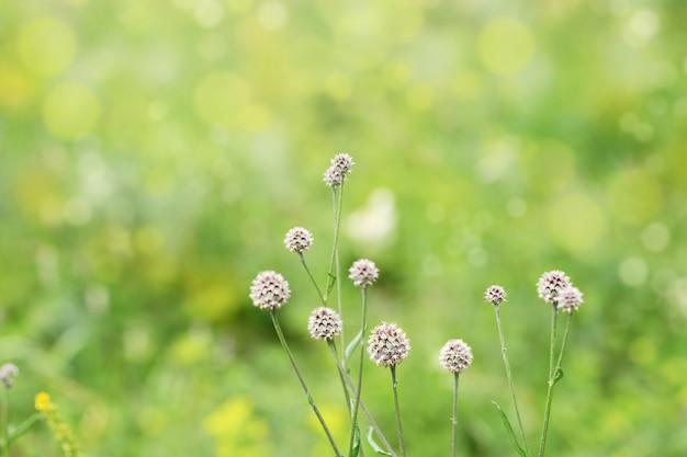 Schöne naturszene mit gras in der natur.